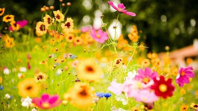 6790153-flower-meadow